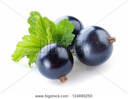 Black currant. Fresh berries isolated on white background