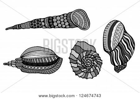 Set of shells. Hand Drawn aquatic doodle vector illustration. Sketch for tattoo or makhenda. Seashell collection. Ocean life.