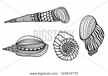 Set of shells. Hand Drawn aquatic doodle vector illustration. Sketch for tattoo or makhenda. Seashell collection. Ocean life.