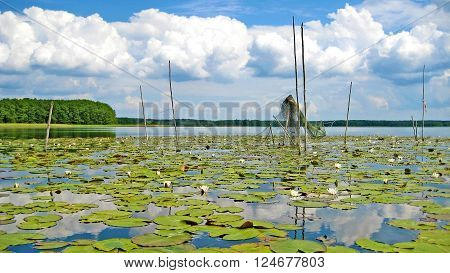 Idyllic lake mueritz with fishnets forest in the background and blue sky with clouds
