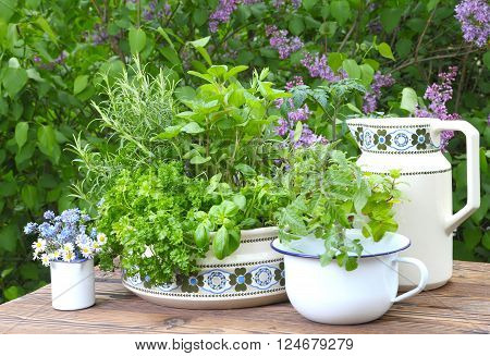 garden herbs in pots and cups on the garden table