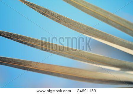 Date palm leaf close up beautiful  photo