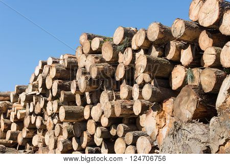 image of a view of logs at the sawmill