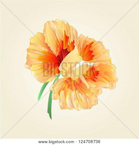 Flower watercress vegetable healthy food vector illustration