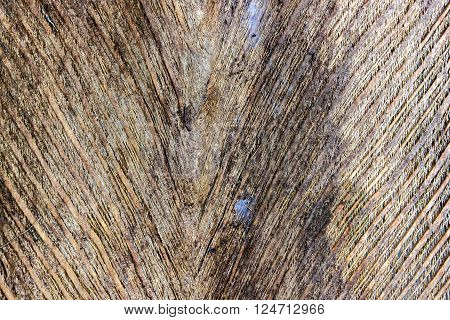 bark the petiole dry bract or old leaf coconut. brown color and dry skin texture mesh nature.