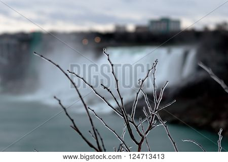 Photo of the icy tree and the Niagara Falls on background