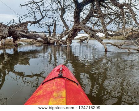 kayak and fallen cottonwood tree - paddling St Vrain Creek near Platteville in northern Colorado