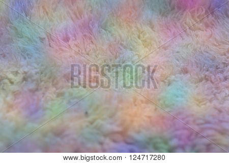 Close up of Unwashed Raw Sheep Wool in Natural Color