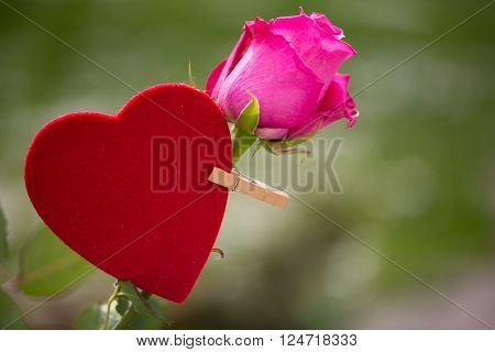 red heart on a pink rose with a clothes peg