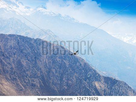 condor soaring above the high mountains