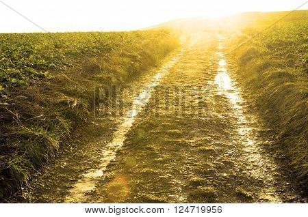 Tractor road and sun flare for background