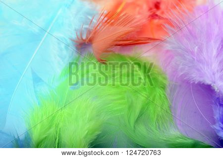 Some Colored Feathers