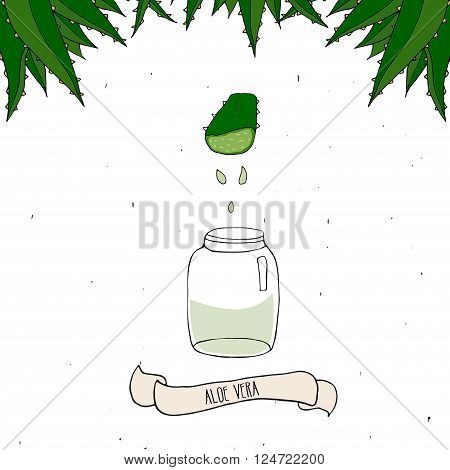 Aloe Vera juice in bottle. Hand drawn illustration isolated on white. Slice of Aloe Vera with drops