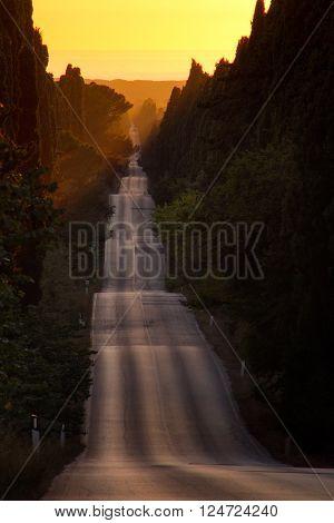 Italy, Tuscany, Castagneto Carducci, Bolgheri, Road And Cypresses
