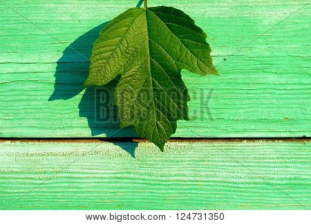 Green Leaf on the Wooden Board Background