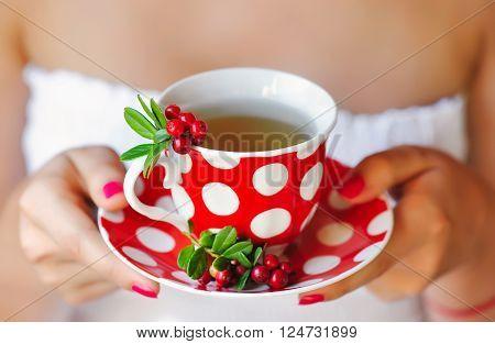 Cowberry (Vaccinium vitis-idaea) tea in woman hands
