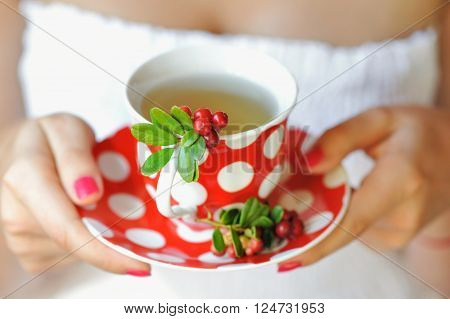 Cowberry (vaccinium Vitis-idaea) Tea In Woman Hands