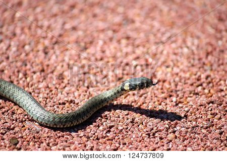 A little snake crawling on the floor.