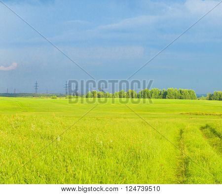 Plain Nature Fresh Landscape