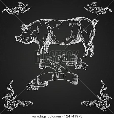 Hand drawn pig illustration. Farm animal vector illustration.