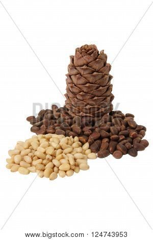 Cone of Siberian cedar pine and its seeds isolated on white background