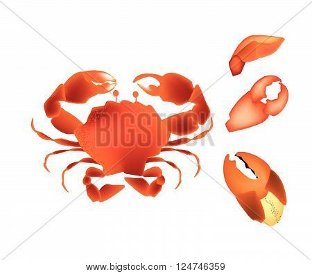 Cuisine and Food Illustration of Crab with Legs and Crab Claws Isolated on A White Background.