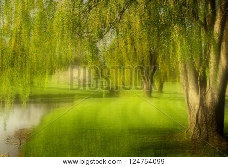 Willow trees in the middle of meadow