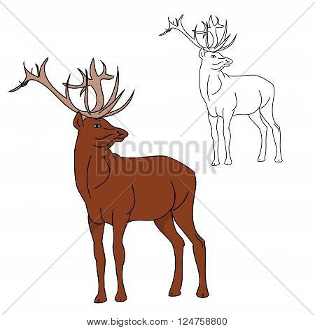 The deer image. The contour of the reindeer and colored drawing of a deer. On white background vector