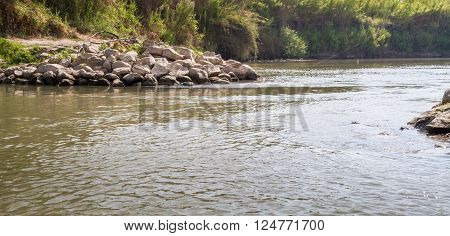 Plants and bushes growing along the banks of the Jordan River Israel ** Note: Soft Focus at 100%, best at smaller sizes