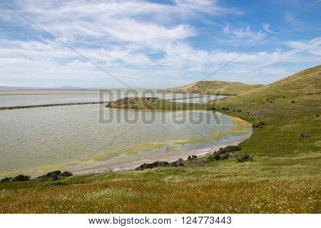 Bay View Trail, Coyote Hills Regional Park, East Bay, Northern California