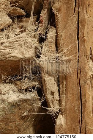 Spooky cobweb on wall