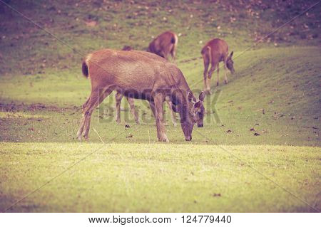 Herd of deer grazing on green grass in summer forest on natural background, tranquil scene. Animals in natural environment, beauty in nature. Vignette and vintage style.