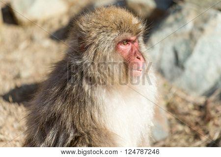 Wildness Monkey