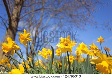 Wild Spring Meadow Flowers on Blurry Background Low Angle View Shallow Depth of Field