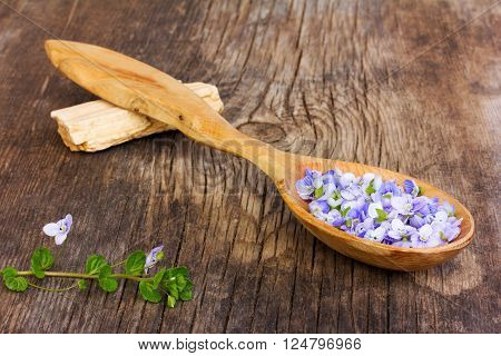 pale blue flower petals plants Persian speedwell in a wooden spoon on old wooden board in the cracks close up