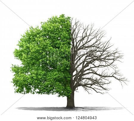 The concept of the dead and the living tree on a white background