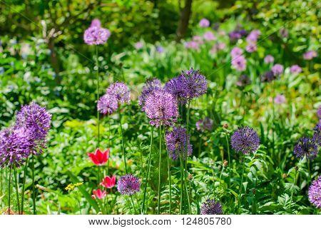 Spring Flowers In The Flowerbed