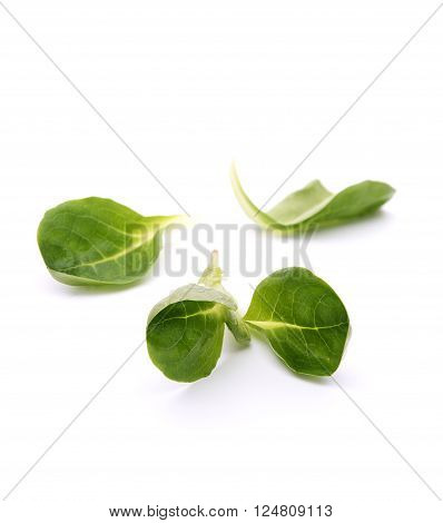 Green leaves of valeriana salad on white, shallow FOD