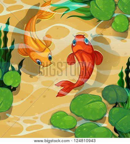 Two goldfish koi swimming in water
