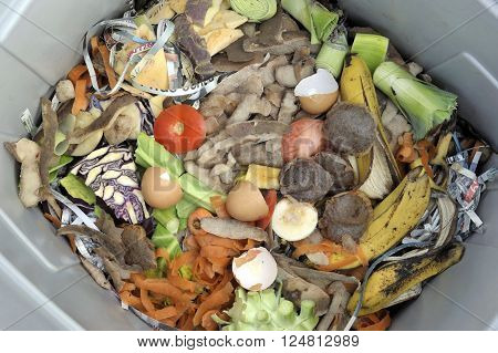 Inside a wormery with vegetable fruit general kitchen food waste and shredded newspaper.