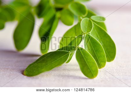 Moringa (Other names are Moringa oleifera Lam. MORINGACEAE Futaba kom hammer vegetable hum hum bug bug Hoo) leaves on wooden board background