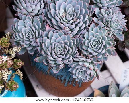 cactus succulents in a planter
