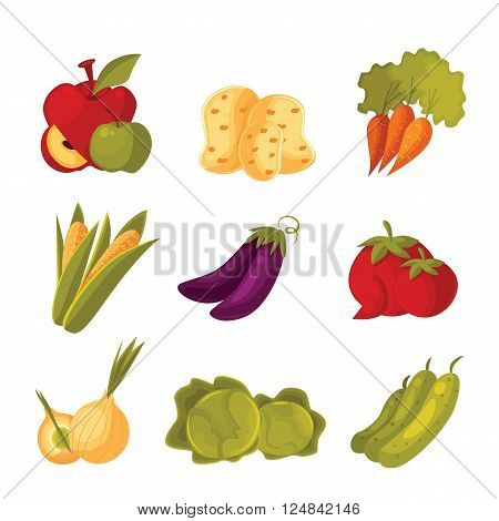 big set of different vegetables, tomato, zucchini, cabbage, corn, carrots, potatoes, vector colorful veggies isolated on white background, farm food, garden stuff in the arrangement