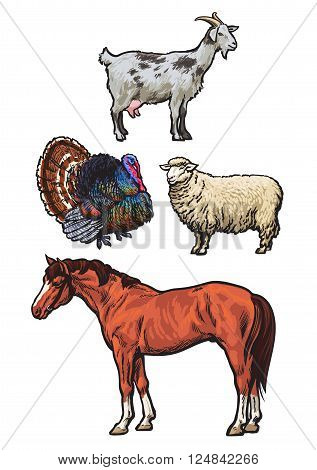Farming, pets, set of cattle from a village, horse, goat, turkey, sheep, Set of vector colored animals isolated on a white background, animal sketch hand-drawn, realistic animal products for sale