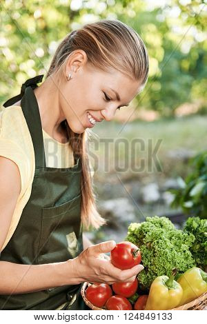 Happy woman cultivator checking picked vegetables in the basket. Young female looking at fresh tomatoes sitting in kitchen garden.