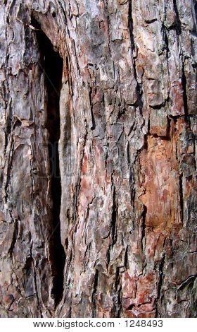 Bark Of Hawaii