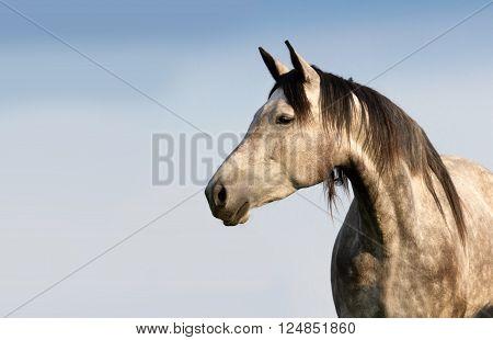 White horse with long mane portrait against blue sky