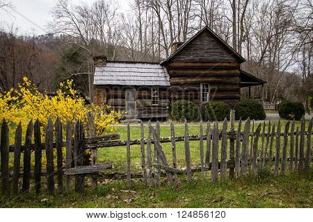 Smoky Mountain Cabin In The Spring. Historical cabin in the Smoky Mountains with spring forsythia in the foreground.