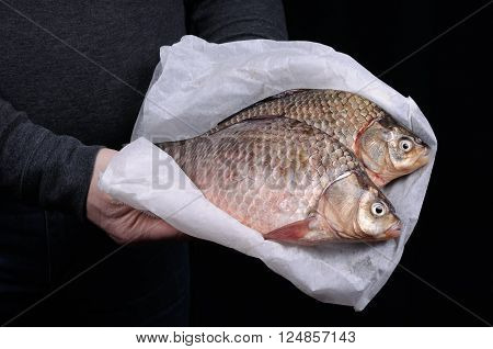 Man holding fresh crucian carp close-up on a folded paper