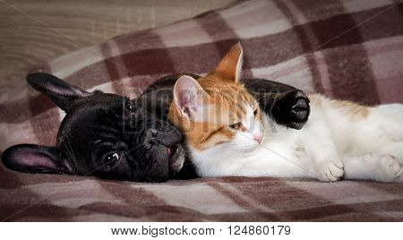 White cat and black dog sleeping together under a knitted blanket. Friendship cats and dogs, animals in the apartment house. Cute pets. Love the different species of animals